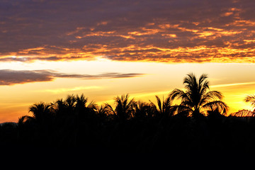 Sunset in the tropical jungle. Travel background.