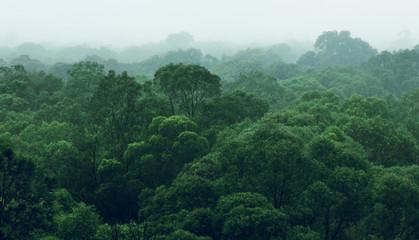 Rainforest jungle aerial view - fototapety na wymiar
