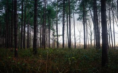 Beligian Forest