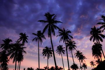 Silhouette palm tree at purple sky.