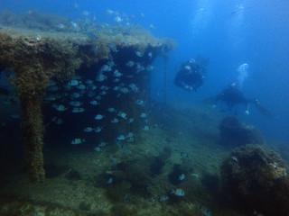Scuba Diving Malta - Maori Wrech