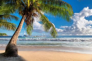 Coco palm on beautiful sandy beach at sunrise in paradise island.