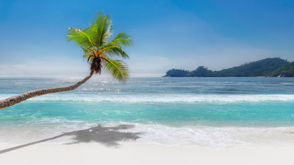 Coconut palm tree on paradise beach with white sand and turquoise sea.