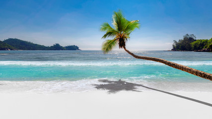 Coco palm over paradise beach, white sand and turquoise sea. Summer vacation and background concept.