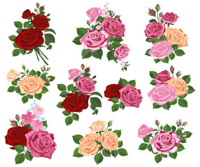 Set of rose leaf buds and flowers on white background. Vector illustration for holiday greetings template decor design.