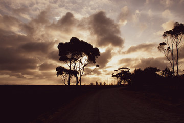 Amazing cloudy sunset in the african bush. South Africa Garden Route; magic pink sky