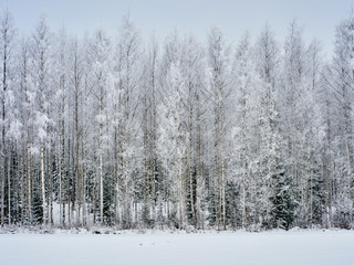 Wintertime forest background
