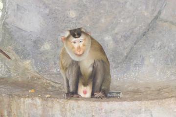 Very funny monkey