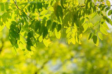 beautiful golden leaves in public park