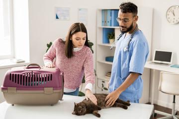 Before examining cat
