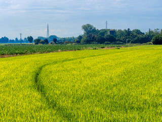 Landscape along Naviglio Grande, Milan