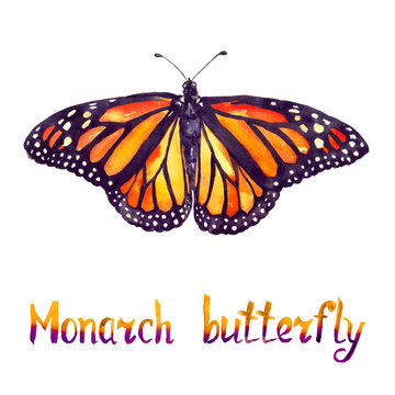 Monarch butterfly, hand painted watercolor  illustration with handwritten inscription