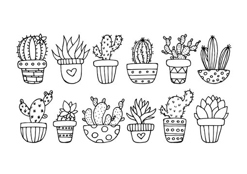 Drawn Cactus Collection Set Cute Floral Mexican
