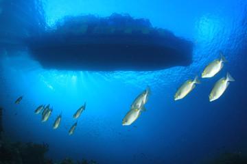 Below a scuba diving boat