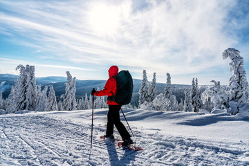 Winter sport activity. Woman hiker hiking with backpack and snowshoes snowshoeing on snow trail forest.