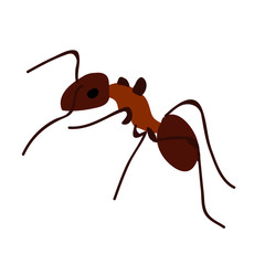 ant, insect, crawling, isolated