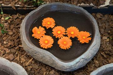 Garten, Blumen, Gerbera, Dekoration
