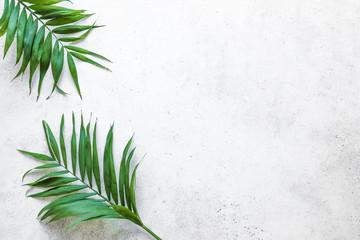 Fototapeta Palm leaves background