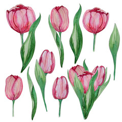 Hand drawn watercolor spring tulips set.