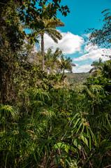 Urwald auf Kuba