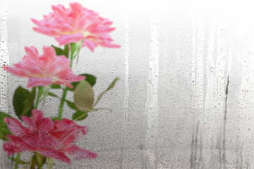 pink rose view from Water drops on window after rain natural texture as background