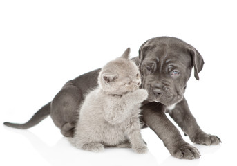 Playful kitten with mastiff puppy. isolated on white background