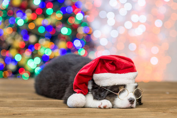 Australian shepherd puppy in red santa hat and eyeglasses sleeping with Christmas tree on background