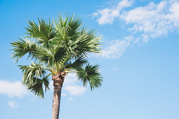palm trees,  tropical background
