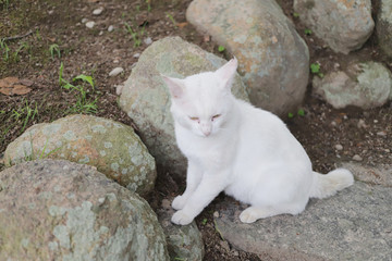 a homeless cat live at the Himeji City park