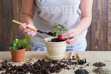 Volunteer gardening lifestyle. Seedling germination. Woman engaged in plant transplantation.