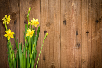 Daffodils with rustic wooden background