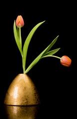 Tulips in gold colored vase on black background