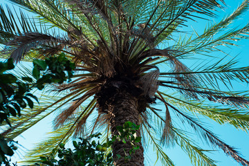 Bottom view of a palm tree