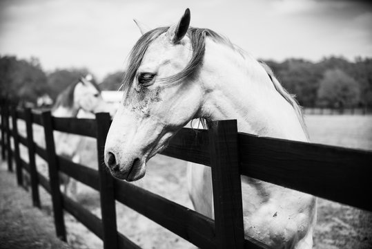 Black and white horse side portrait