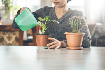 woman hand water with plant on dek
