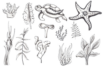 Ocean sea watercolor and graphic handpainted elements with corals and underwater animals. Black  white doodle monochrome natural and living coral elements crab, jellyfish, turtle, seahorse, starfish