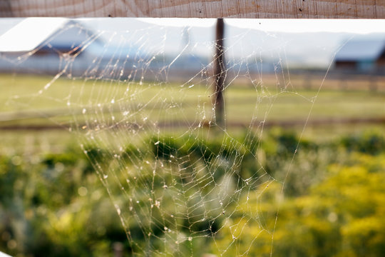 Country landscape - cobweb on a wooden fence