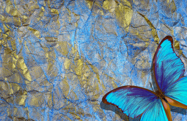 Fotorollo Schmetterlinge im Grunge morpho butterfly on bright shining background. gold blue texture background. golden crumpled paper.