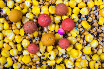 The mixture of grains as bait fishing for big carp.