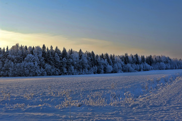 snow covered winter field