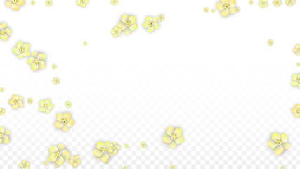Vector Realistic Yellow Flowers Falling on Transparent Background.  Spring Romantic Flowers Illustration. Flying Petals. Sakura Spa Design. Blossom Confetti. Design Elements for Wedding Decoration.