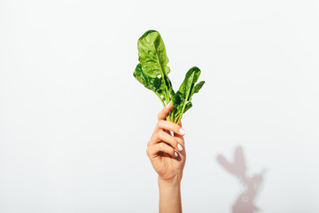 Woman's hand with manicure holding green bunch of spinach