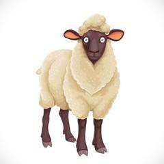 Cute dark cartoon  sheep with white  lush wool isolated on white background