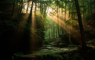 Sun rays peaking through the woods