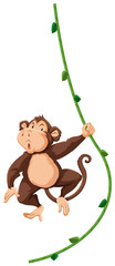 A monkey hanging on vine