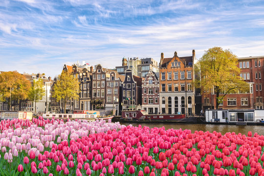Amsterdam Netherlands, city skyline Dutch house at canal waterfront with spring tulip flower
