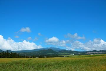 제주 농촌 풍경이다.