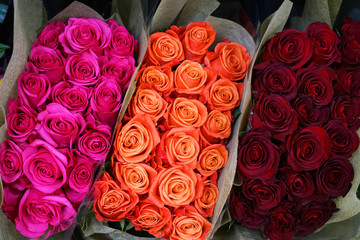 Wall Mural - bunches of colorful roses