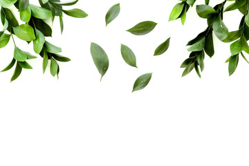 Spring green plants, sprigs, leaves border on white background top view space for text border