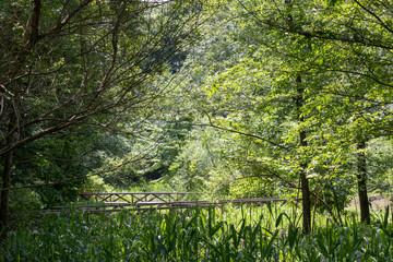 Spring fresh green landscape, Park in Funabashi City, Chiba prefecture, Japan